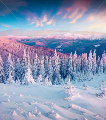 Bild Fantastischer Wintersonnenaufgang in den Karpatenbergen mit Schnee kauerte Bäume. Bunte im Freienszene, guten Rutsch ins Neue Jahr-Feierkonzept. Nachbearbeitung des künstlerischen Stils.