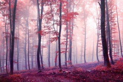 Bild Fantasy autumn color forest