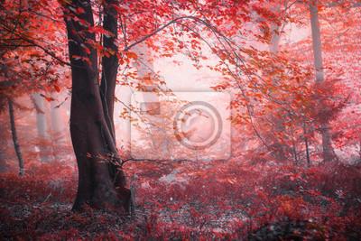 Fantasy fairytale autumn season foggy red colored forest.