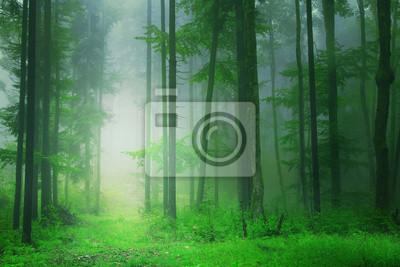 Fantasy green forest background