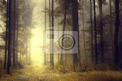 Fantasy orange forest light