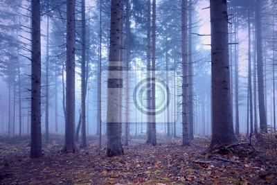 Fantasy soft blue pink colored foggy conifer forest landscape.