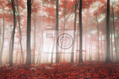 Fantasy-Wald