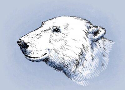 Bild Farbe gravieren isoliert Vektor Bär