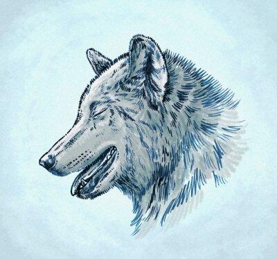 Bild Farbe gravieren tinte zeichnen wolf illustration