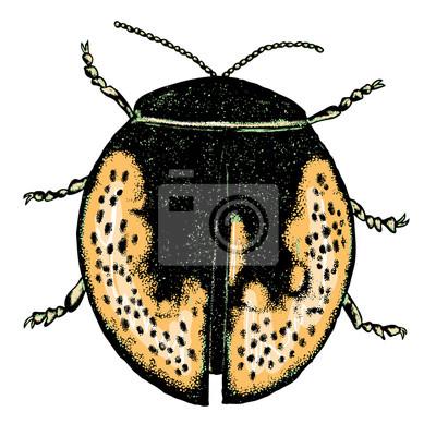 Farbe Insekten Käfer Bug Bunte Arten In Der Weinlese Alte Hand