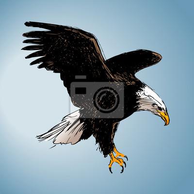 Farbe Zeichnung eines Adlers. Vektor-Illustration