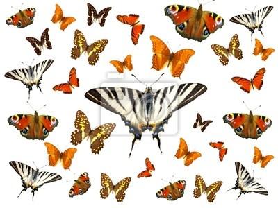 Bild Farbige Schmetterlinge isoliert auf weiß