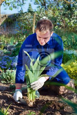 Farmer Einpflanzen einer Iris Blume