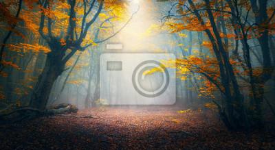 Feenwald im Nebel. Herbstwälder. Verzauberter Herbstwald im Nebel am Morgen. Alter Baum. Landschaft mit Bäumen, buntes orange und rotes Laub und blauer Nebel. Natur Hintergrund. Dunkler Nebelwald