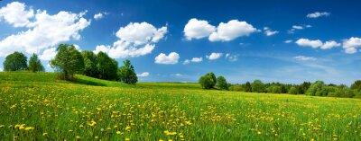 Bild Feld mit Löwenzahn und blauer Himmel