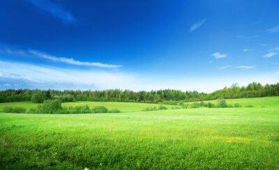 Bild Feld von Gras und perfekte Himmel