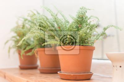 Fern in Vase auf Holztisch, selektiven Fokus