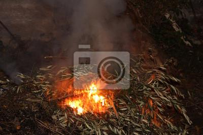 Bild Feuer in der Natur