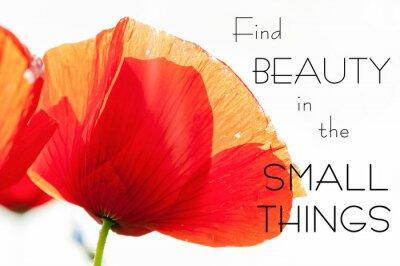 Bild Finden Sie Schönheit in den kleinen Dingen. Motivation inspirierend Zitat