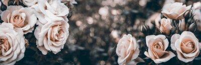 Bild Fine art image of beautiful pastel roses in garden.