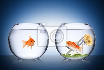Bild Fisch Urlaubskonzept