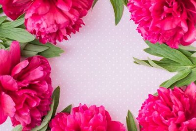 Bild Flat lay composition with red peonies and green leaves on a pink background