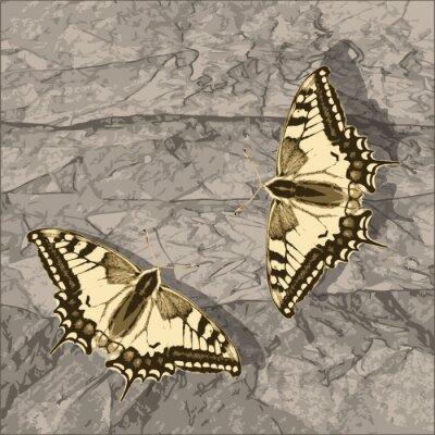 Bild Fliegende Schmetterling über Grunge-Wand.