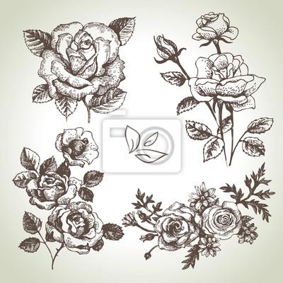 Floral-Set. Hand gezeichnete Illustrationen von Rosen