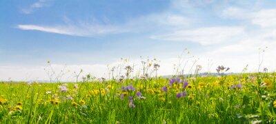 Bild Flower field in springtime