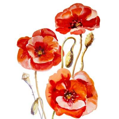 Bild Flower field poppy