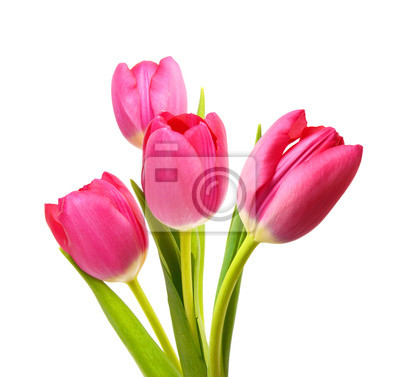 Bild Flower Tulpen als Symbol für Romantik und Liebe