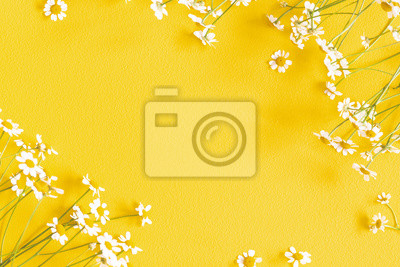 Bild Flowers composition. Chamomile flowers on yellow background. Spring, summer concept. Flat lay, top view, copy space, square