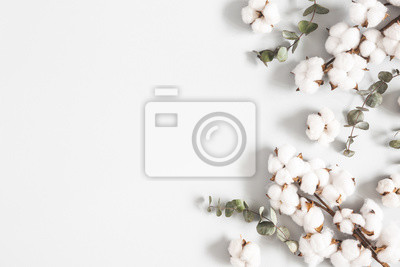 Bild Flowers composition. Eucalyptus leaves and cotton flowers on pastel gray background. Flat lay, top view, copy space