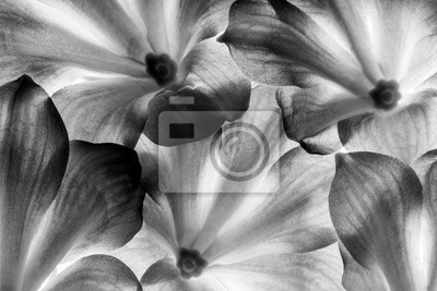 Bild flowers in detail - macro texture in black and white