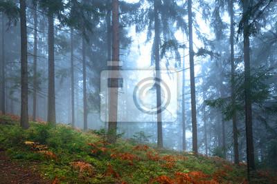 Foggy autumn season colored forest landscape.