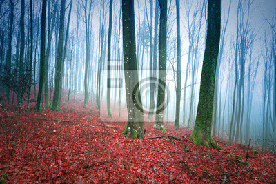 Foggy beech forest landscape with red leaves on the ground.