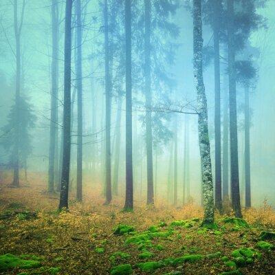 Bild Foggy mystic colorful forest