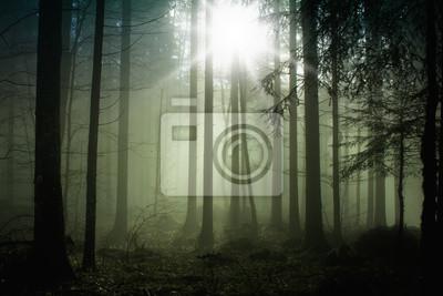 Foggy Wald mit Sonnenlicht