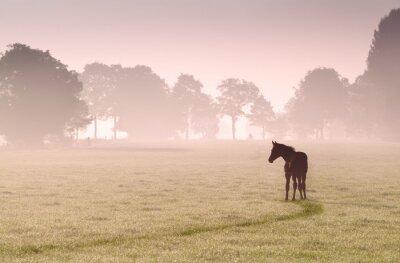 Bild Fohlen-Silhouette auf der Weide im Nebel