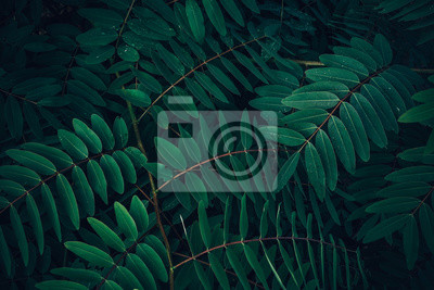 Bild Foliage of tropical leaf in dark green with rain water drop on texture, abstract pattern nature background.