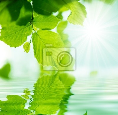 fondo con agua y vegetacion