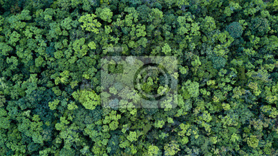 Bild Forest and tree landscape texture background, Aerial top view forest, Texture of forest view from above.