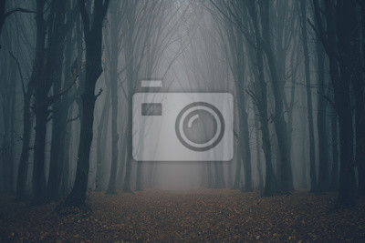 Bild Forest in fog with mist. Fairy spooky looking woods in a misty day. Cold foggy morning in horror forest with trees