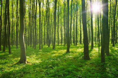 Bild forest in spring