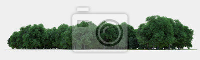 Bild Forest isolated. Image useful for banners nd poster or photo maipulations. 3d rendering.