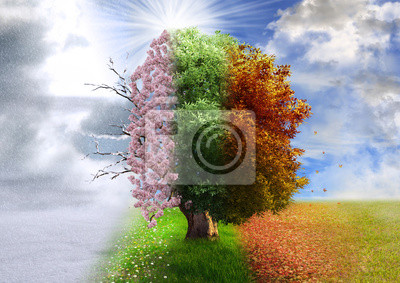 Bild Four season tree, photo manipulation, magical, nature