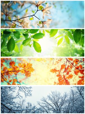 Bild Four seasons. A pictures that shows four different pictures representing the four seasons: winter, spring, summer and autumn.