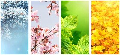 Bild Four seasons of year