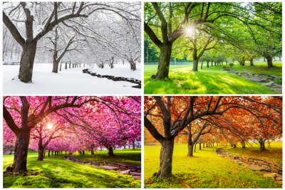 Bild Four seasons with japanese cherry trees in Hurd Park, Dover, New Jersey