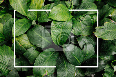 Bild Frame tropical leaf texture green leaves Background, foliage nature