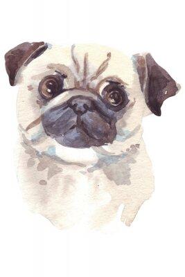 Bild Französische Bulldogge Illustration