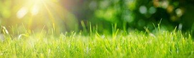 Bild Fresh green grass background in sunny summer day in park
