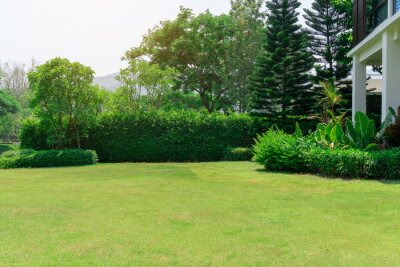 Bild Fresh green grass smooth lawn as a carpet with curve form of bush, trees on the background, good maintenance lanscapes in a garden under cloudy sky and morning sunlight