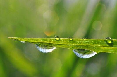 Bild Fresh green grass with dew drop closeup. Nature Background